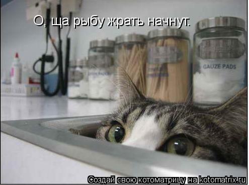 Котоматрица: О, ща рыбу жрать начнут.