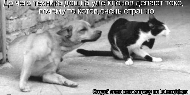 Котоматрица: почему то котов,очень странно До чего техника дошла уже клонов делают токо,