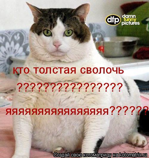 Котоматрица: кто толстая сволочь  ????????????????  яяяяяяяяяяяяяяяя???????!!!!!!!???????!!!!!!!