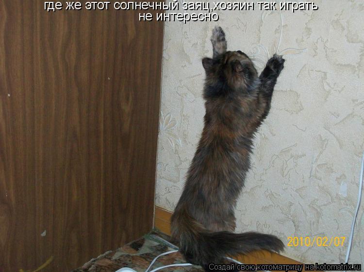 Котоматрица: где же этот солнечный заяц,хозяин так играть  не интересно