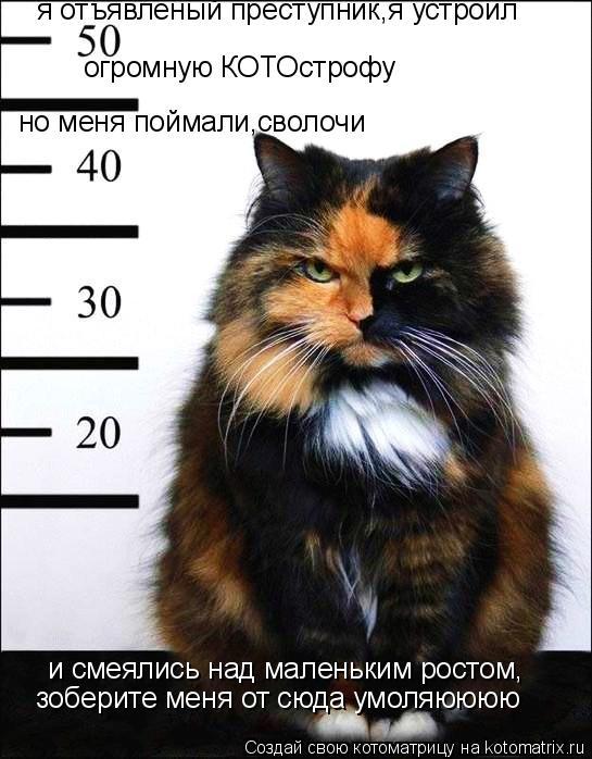 Котоматрица: я отъявленый преступник,я устроил  огромную КОТОстрофу но меня поймали,сволочи  и смеялись над маленьким ростом,  зоберите меня от сюда умо