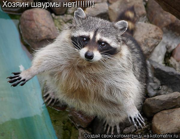 Котоматрица: Хозяин шаурмы нет!!!!!!!!