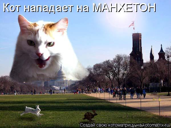 Котоматрица: Кот нападает на МАНХЕТОН