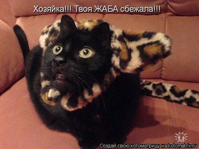 Котоматрица: Хозяйка!!! Твоя ЖАБА сбежала!!!