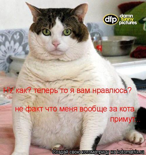 Котоматрица: НУ как? теперь то я вам нравлюсь? не факт что меня вообще за кота  примут...
