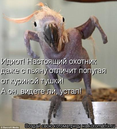 Котоматрица: Идиот! Настоящий охотник даже с пьяну отличит попугая от куриной тушки!  А он, видете ли, устал!