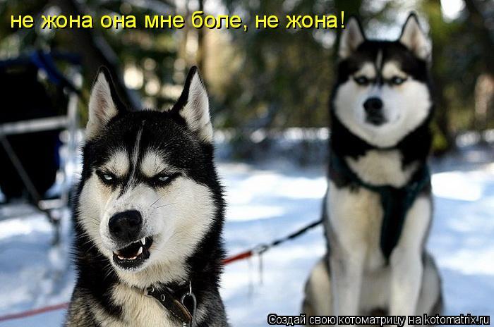 Котоматрица: не жона она мне боле, не жона!