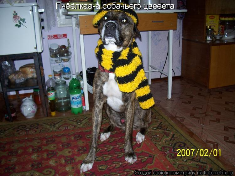 Котоматрица: Пчёёлкаа-а собачьего цвееета