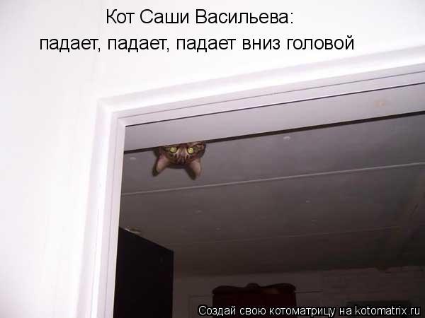 Котоматрица: Кот Саши Васильева:  падает, падает, падает вниз головой