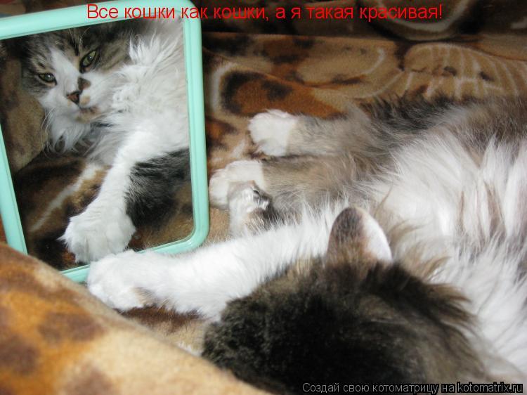 Котоматрица: Все кошки как кошки, а я такая красивая!