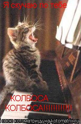 Котоматрица: Я скучаю по тебе  КОЛБОСА КОЛБОСА!!!!!!!!!!!!