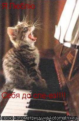 Котоматрица: Я Люблю Себя до сле-ез!!!!