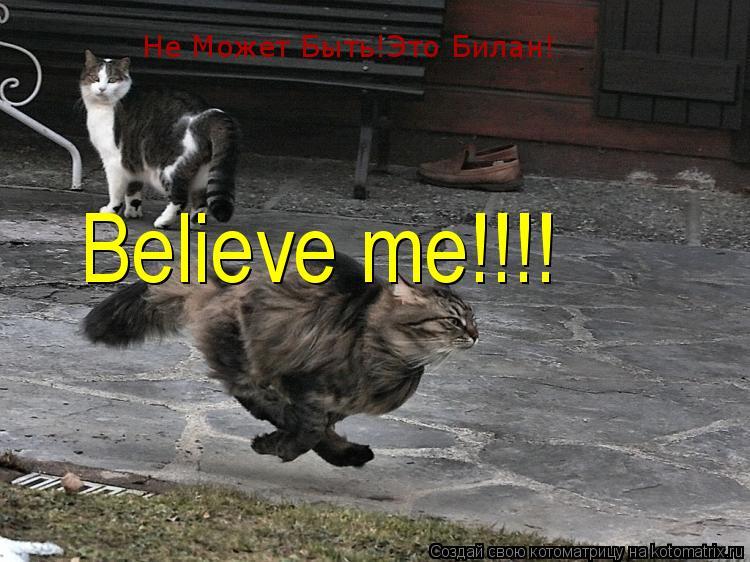 Котоматрица: Не Может Быть!Это Билан! Believe me!!!!