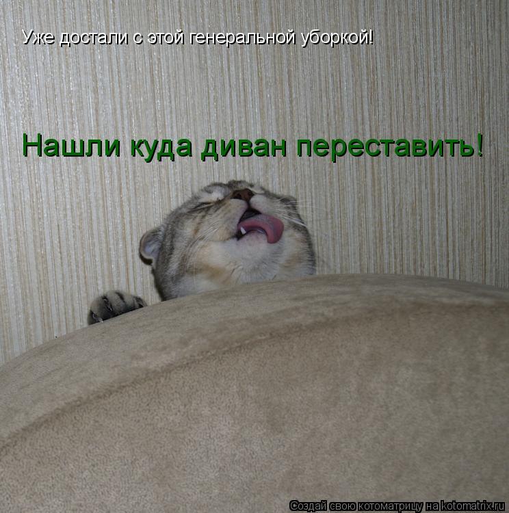 Котоматрица: Уже достали с этой генеральной уборкой! Нашли куда диван переставить!