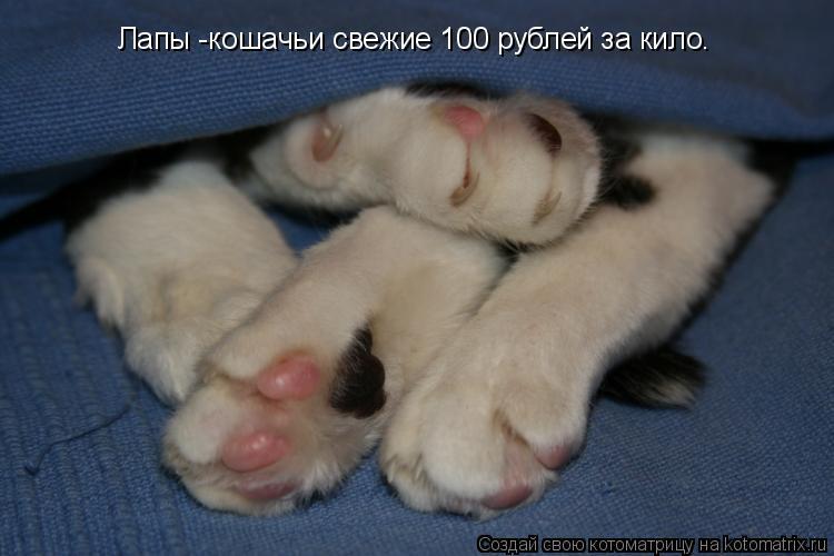 Котоматрица: Лапы -кошачьи свежие 100 рублей за кило.