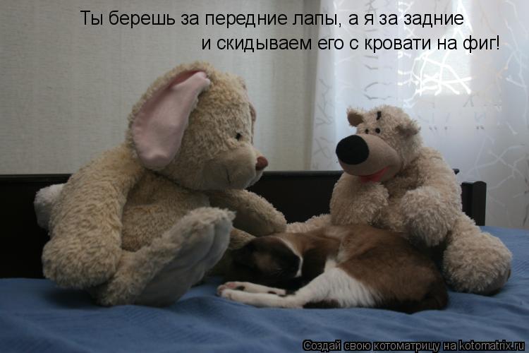 Котоматрица: Ты берешь за передние лапы, а я за задние и скидываем его с кровати на фиг!