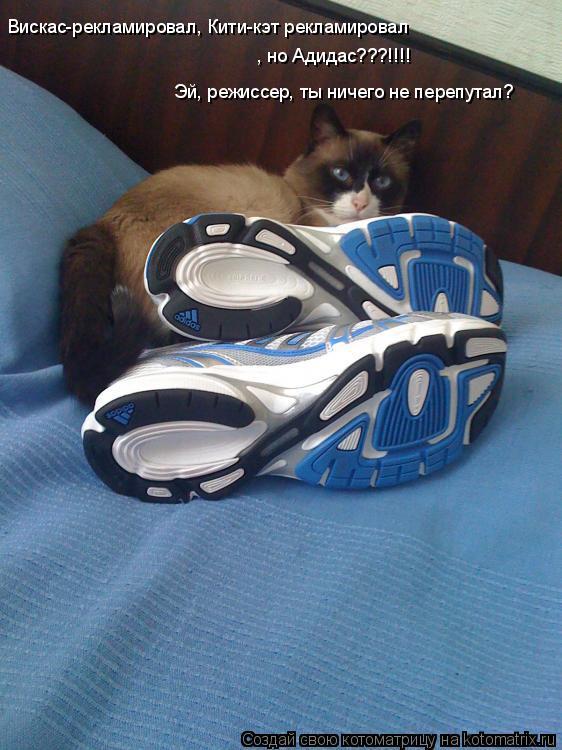 Котоматрица: Вискас-рекламировал, Кити-кэт рекламировал , но Адидас???!!!! Эй, режиссер, ты ничего не перепутал?