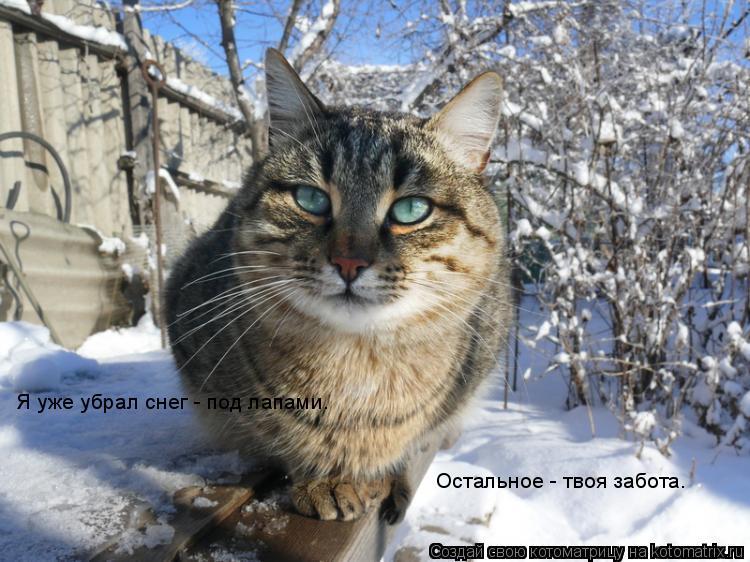 Котоматрица: Я уже убрал снег - под лапами. Остальное - твоя забота.