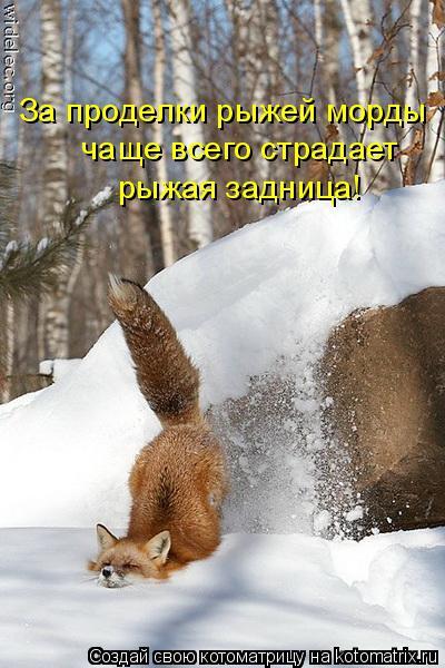 Котоматрица: За проделки рыжей морды  чаще всего страдает  рыжая задница!