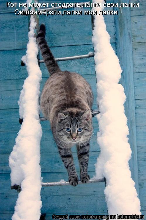 Котоматрица: Кот не может отодрать,лапки свои,лапки Ой примёрзли,лапки мои,лапки