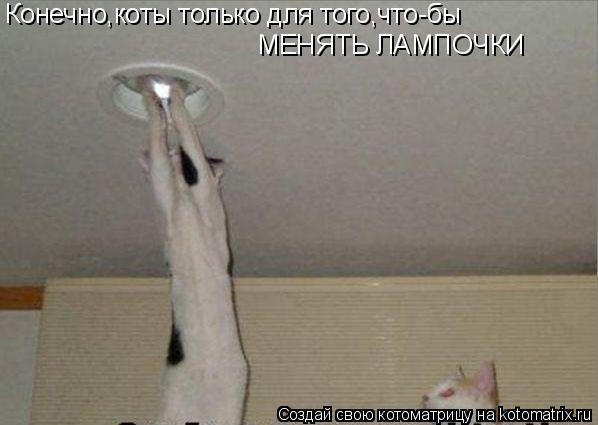 Котоматрица: Конечно,коты только для того,что-бы МЕНЯТЬ ЛАМПОЧКИ