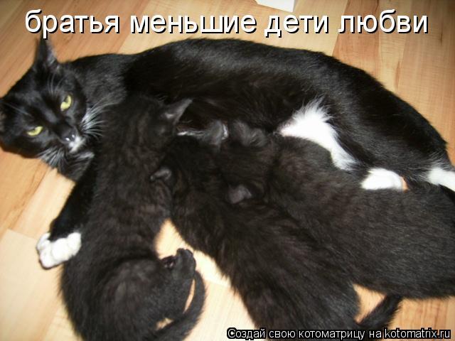 Котоматрица: братья меньшие дети любви