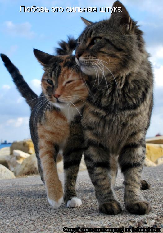 Котоматрица: Любовь это сильная штука