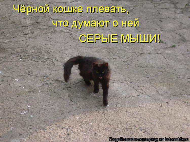 Котоматрица: Чёрной кошке плевать, Чёрной кошке плевать, что думают о ней что думают о ней СЕРЫЕ МЫШИ!