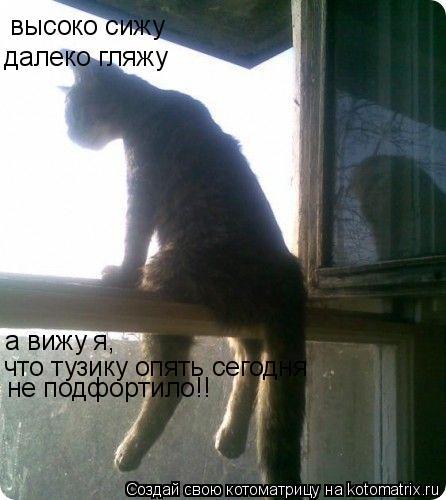 Котоматрица: высоко сижу далеко гляжу а вижу я, что тузику опять сегодня не подфортило!!