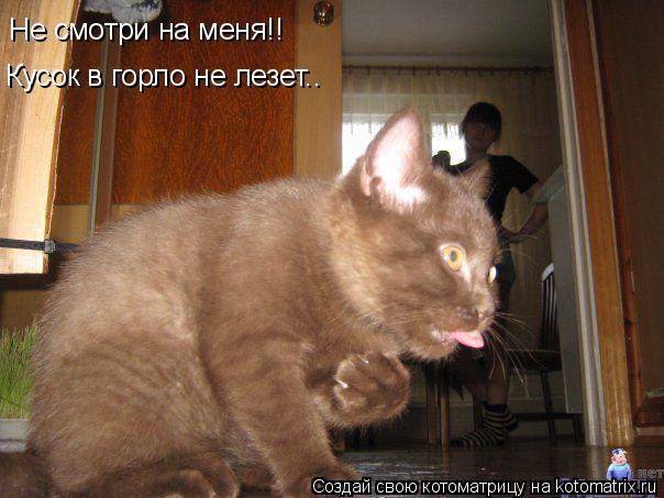 Котоматрица: Не смотри на меня!! Кусок в горло не лезет..