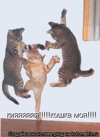 Котоматрица: кияяяяяя!!!!!кошка моя!!!!