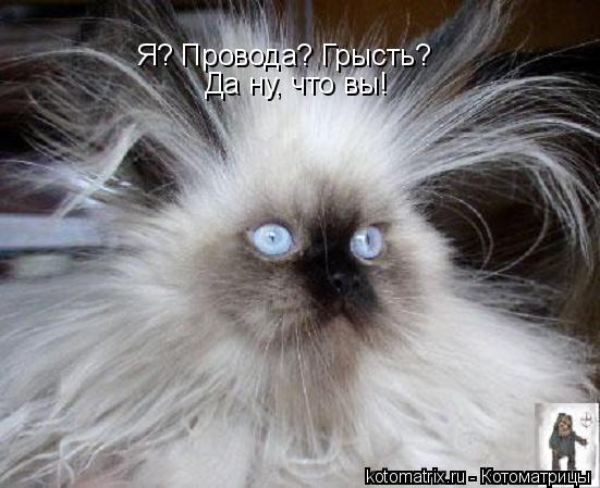 Котоматрица: Я? Провода? Грысть? Да ну, что вы!