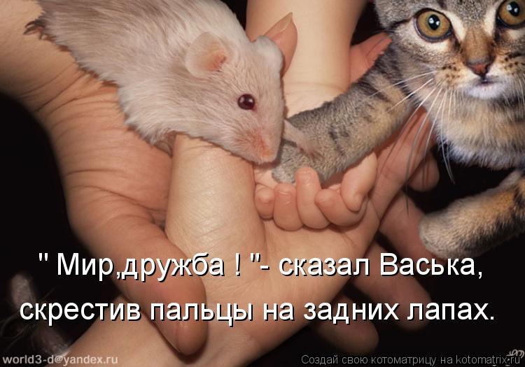 """Котоматрица: """" Мир,дружба ! """"- сказал Васька, скрестив пальцы на задних лапах."""