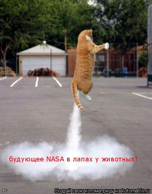 Котоматрица: будующее NASA в лапах у животных!