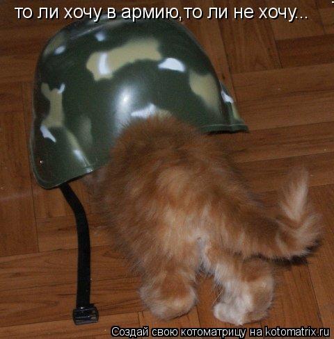Котоматрица: то ли хочу в армию,то ли не хочу... то ли хочу в армию,то ли не хочу...