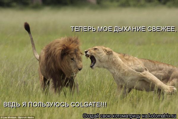 Котоматрица: ТЕПЕРЬ МОЕ ДЫХАНИЕ СВЕЖЕЕ,  ВЕДЬ Я ПОЛЬЗУЮСЬ COLGATE!!!