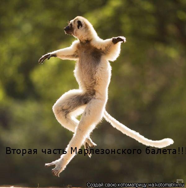 Котоматрица: Вторая часть Марлезонского балета!!!