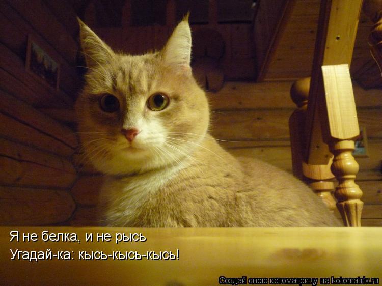 Котоматрица: Я не белка, и не рысь Угадай-ка: кысь-кысь-кысь!