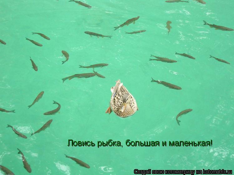 Котоматрица: Ловись рыбка, большая и маленькая!