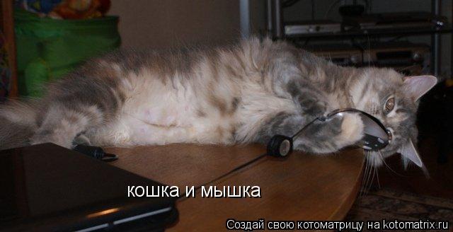 Котоматрица: кошка и мышка
