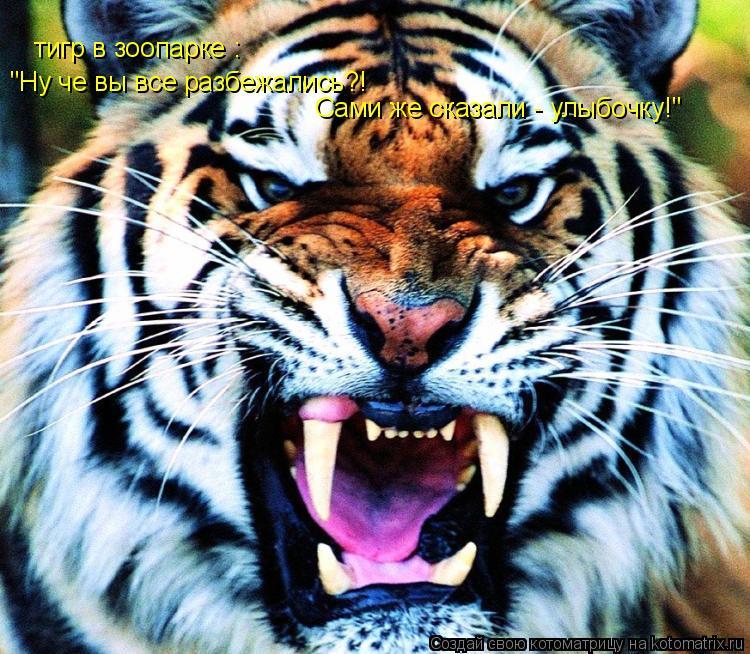 """Котоматрица: тигр в зоопарке : """"Ну че вы все разбежались?!  Сами же сказали - улыбочку!"""""""