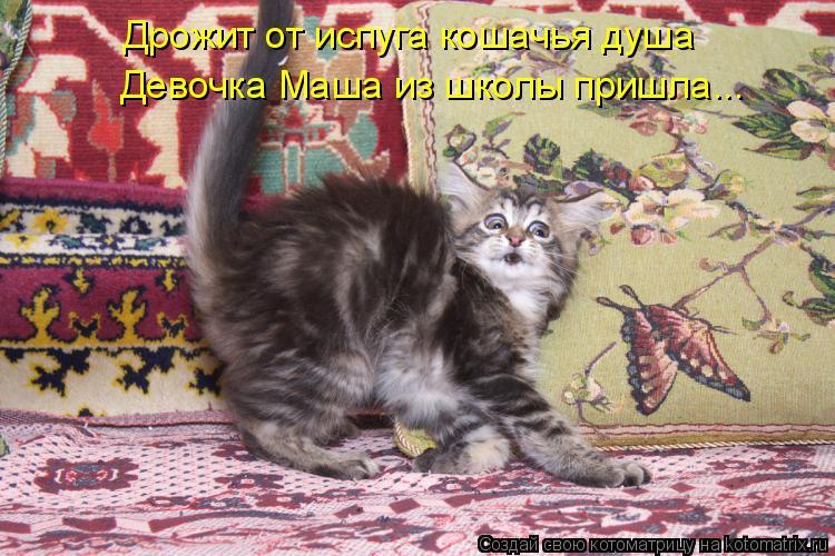 Котоматрица: Дрожит от испуга кошачья душа  Девочка Маша из школы пришла...