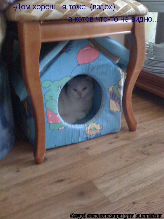 Котоматрица: -Дом хорош...я тоже..(вздох) а котов что-то не видно...