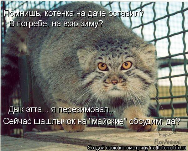 """Котоматрица: В погребе, на всю зиму? Дык этта... я перезимовал...  Сейчас шашлычок на """"майские"""" обсудим, да? Помнишь, котенка на даче оставил?"""