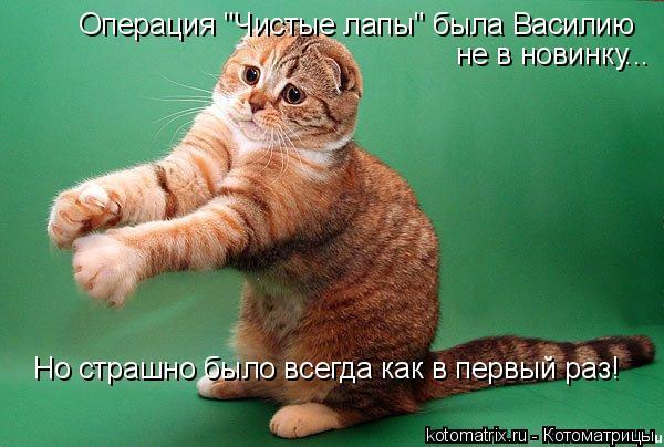 """Котоматрица: Но страшно было всегда как в первый раз! Операция """"Чистые лапы"""" была Василию не в новинку..."""