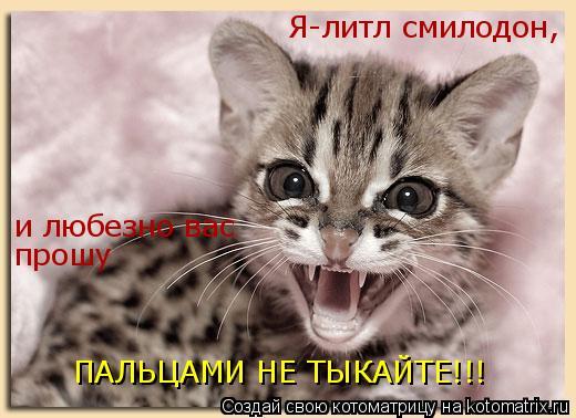 Котоматрица: Я-литл смилодон, и любезно вас прошу ПАЛЬЦАМИ НЕ ТЫКАЙТЕ!!!