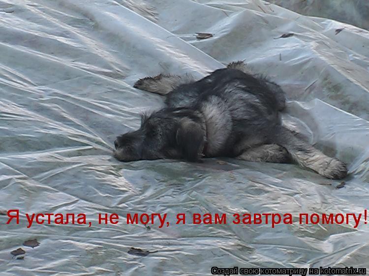 Котоматрица: Я устала, не могу, я вам завтра помогу! Я устала, не могу, я вам завтра помогу!