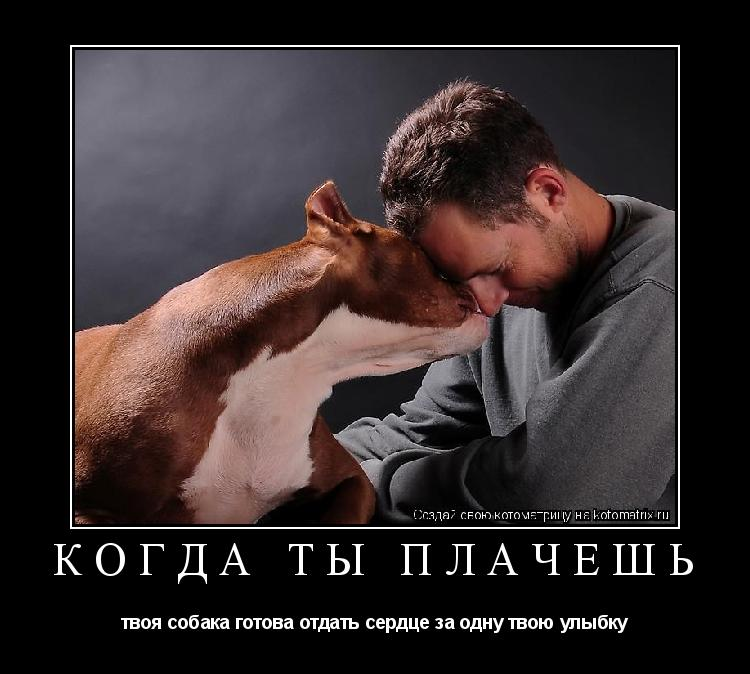 Котоматрица: когда ты плачешь твоя собака готова отдать сердце за одну твою улыбку