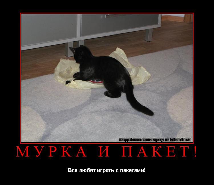 Котоматрица: Мурка и пакет! Все любят играть с пакетами!