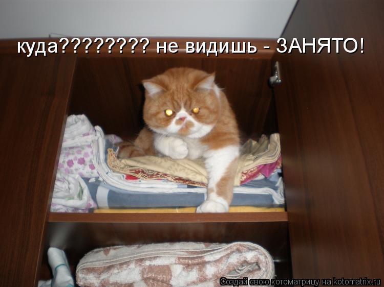 Котоматрица: куда???????? не видишь - ЗАНЯТО!